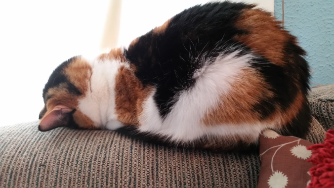 Tatiana the cat sleeping with face in sofa like she passed out.